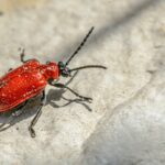 Fortify Your House With These Pest Control Tips!
