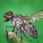 Helpful Pest Control Tips You Can Use