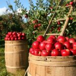 Things To Do To Become Better At Organic Gardening